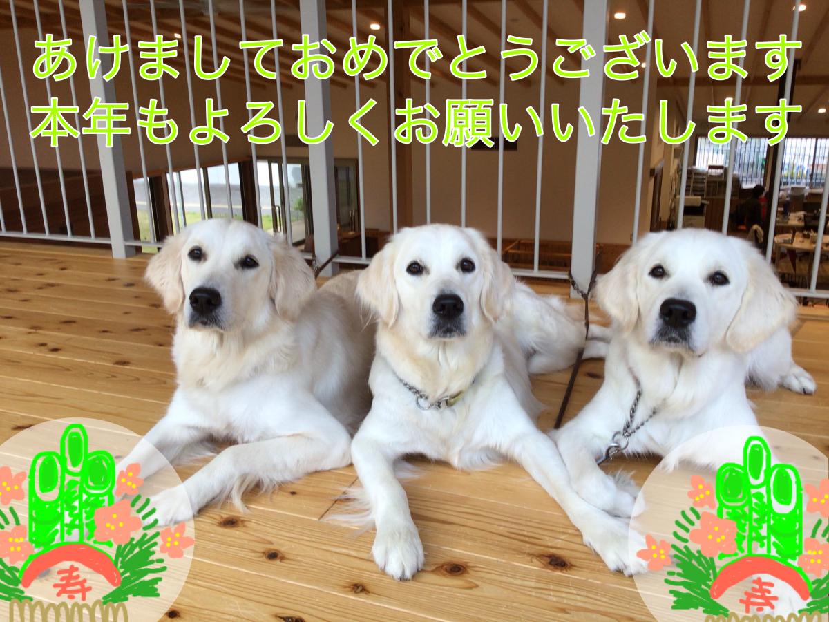 https://kansai-guidedog.jp/report/41f9b56631ac9528533543beaa5679a469dee554.png