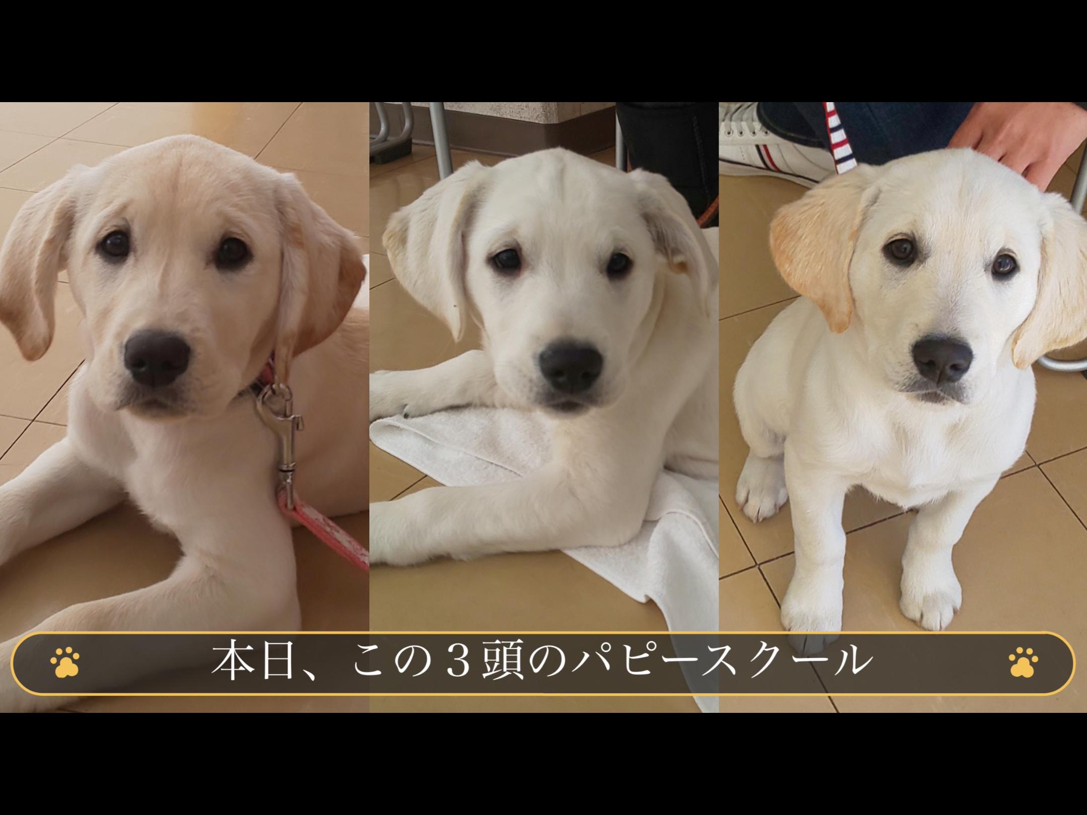 https://kansai-guidedog.jp/report/afacd15799e7eb448885c83d21a83ee5c156aa1d.png