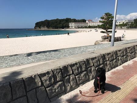 Vちゃん白浜-1.jpg