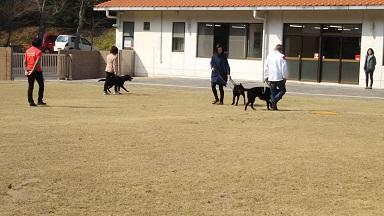 散歩練習2.jpg