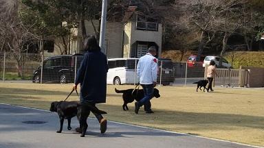 散歩練習.jpg