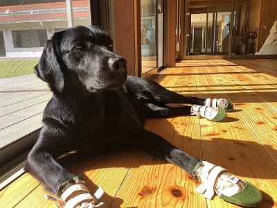 犬用靴 IMG_3892.JPG